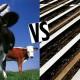 Wellness Wednesday #2: Why Choose Grass-Fed?