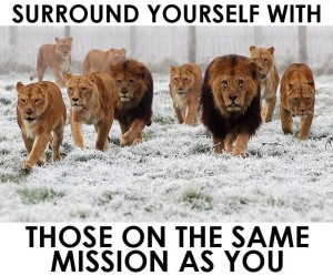 surround yourself with those on the same mission as you LION