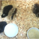New Chicks, Part 1: Will They Be Adopted or Killed?