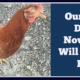 New Chicks, Part 4: Our Little Chick Died… Now What?